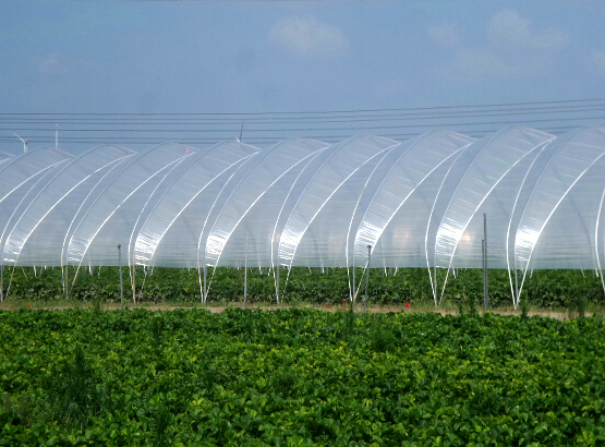 Repair tape for ETFE film greenhouses